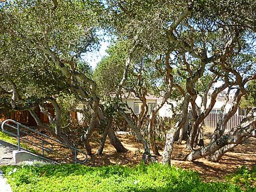Carmel Townhouses Montereypeninsulacondos Com
